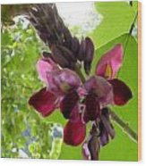 Flowering Vine  Wood Print