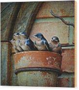 Flowerpot Swallows Wood Print by Jai Johnson