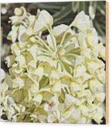 Flowers - 0053 Wood Print