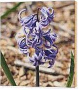 Flowers - 0054 Wood Print