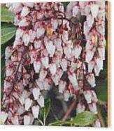 Flowers - 0055 Wood Print