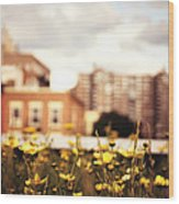 Flowers - High Line Park - New York City Wood Print