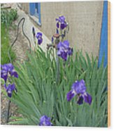 Flowers And Colors Of Taos Wood Print
