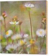 flowers endemic at Sierra Nevada Wood Print