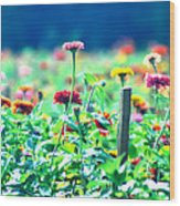 Flowers Everywhere Wood Print