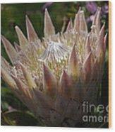 Flowers Of New Zealand 3 Wood Print