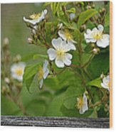 Flowers On The Fence Wood Print
