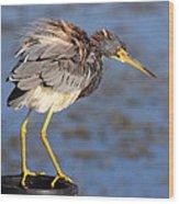 Fluffy Tri Colored Heron Wood Print