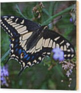 Fly Butterfly Fly Wood Print