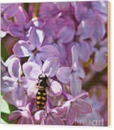 Fly In The Lilacs Wood Print