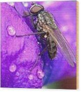 Fly In The Rain Wood Print