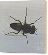 Fly Wood Print