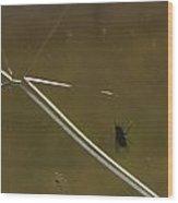 Fly N Crack Wood Print