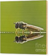 Fly Reflection Wood Print