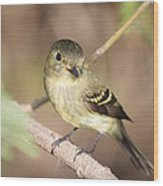 Flycatcher On A Branch Wood Print