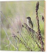 Flycatcher On A Twig Wood Print