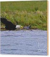 Flying Bald Eagle Wood Print