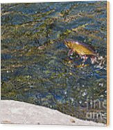 Flying Brook Trout Wood Print