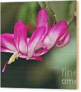 Flying Cactus Flower Wood Print