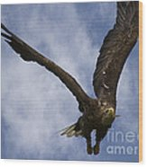 Flying European Sea Eagle I Wood Print