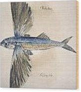 Flying-fish, 1585 Wood Print