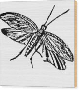 Flying Insect Wood Print