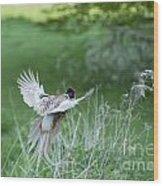 Flying Pheasant Wood Print