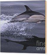 Flying Porpoise Wood Print