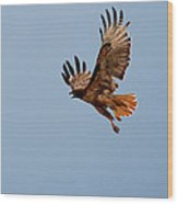 Flying Red Tail 204-2 Wood Print