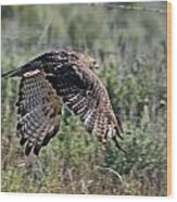 Flying Redtail Hawk  Wood Print