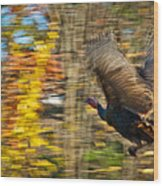 Flying Wild Turkey Escapes Thanksgiving Wood Print