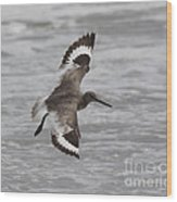 Flying Willet Wood Print by Chris Hill