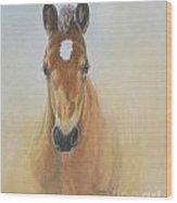 Foal Study Wood Print