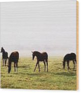 Foals With A Mist Behind Them Wood Print
