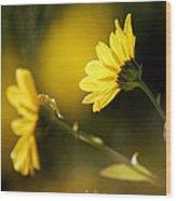 Focos De Luz Wood Print