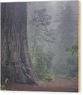 Fog And Redwoods Wood Print