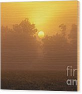 Foggy Sun Wood Print