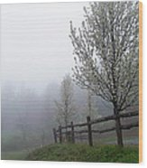Foggy Trees In The Valley Wood Print