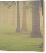 Foggy Trees Pano Wood Print