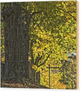 Foliage At The Cemetery Wood Print