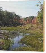 foliage in the swamp lands of CT Wood Print