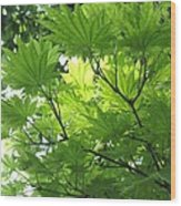 Foliage Tree Wood Print