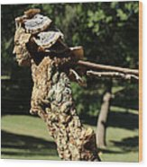Foliated Victory Among The Trees Wood Print