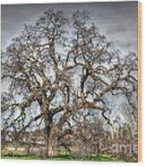Folsom Oak Tree Wood Print