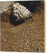 Fools Gold And Pine Cone Wood Print