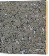Foot Prints In The Mud Wood Print