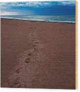 Foot Prints To The Sea Wood Print by Matt Dobson