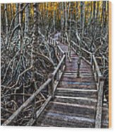 Footpath In Mangrove Forest Wood Print by Adrian Evans