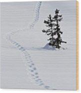 Footstep Trail On Snow Wood Print
