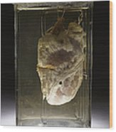 Forensic Evidence, Heart Perforated Wood Print by Science Source